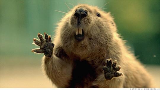Bridgestone Beaver